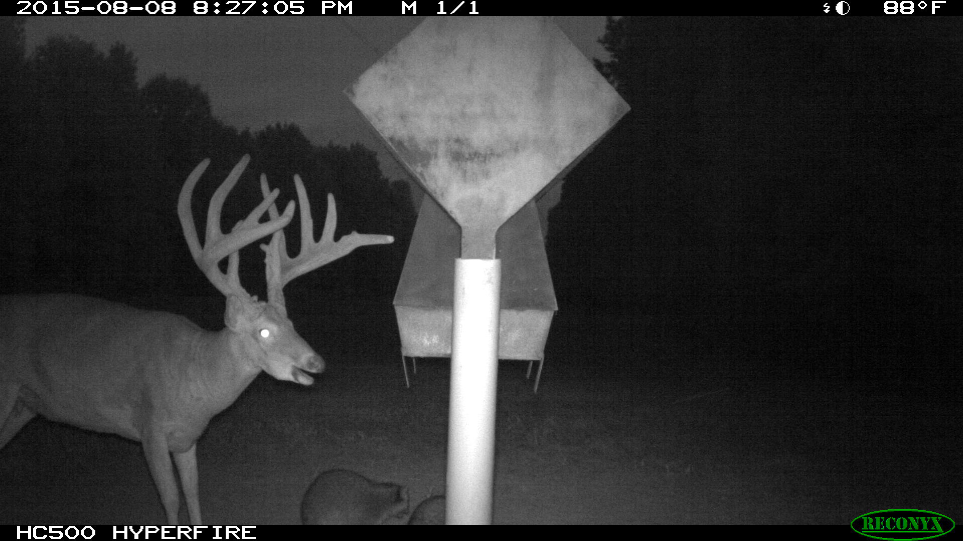 com everything running deer feeder texasbowhunter buck county for month forums by fawn year feeders the else pushmataha off a has thread doe showthread no all family page been old this boss herself group