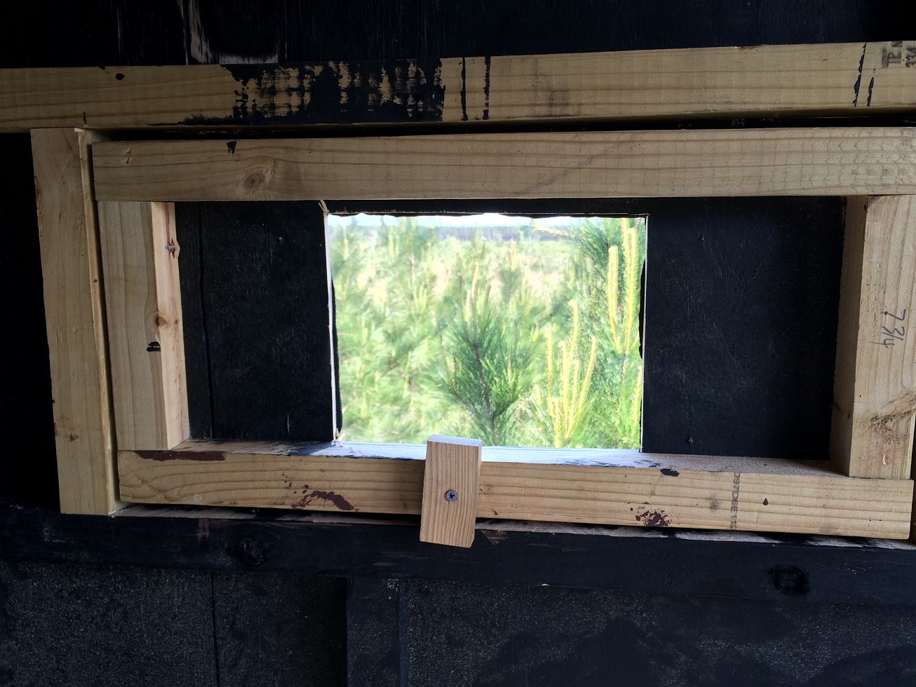 Hunting Blind Windows